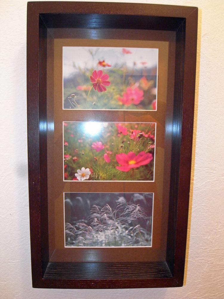 レストルームの絵はがきは秋桜とススキ